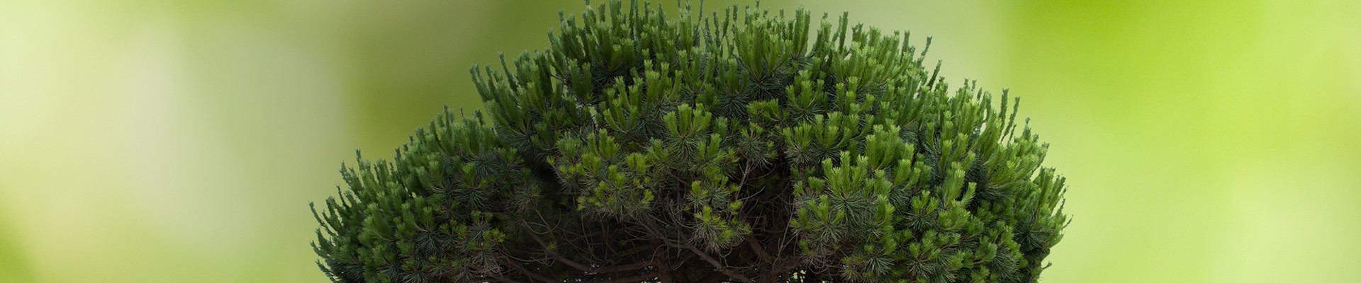 Conception web Vert l'écologie